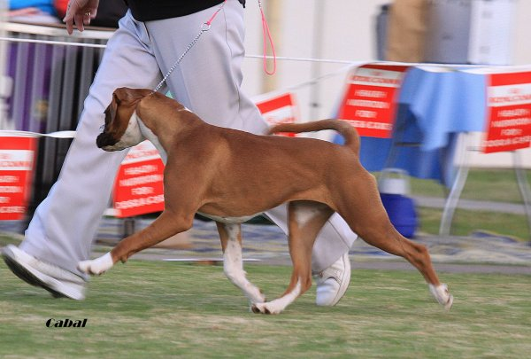 dogsonshow16.613.moving.jpg - 52347 Bytes